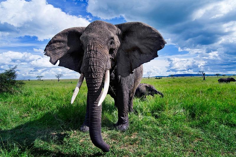 2018 世界大象日_图片新闻_中国野生动物保护协会