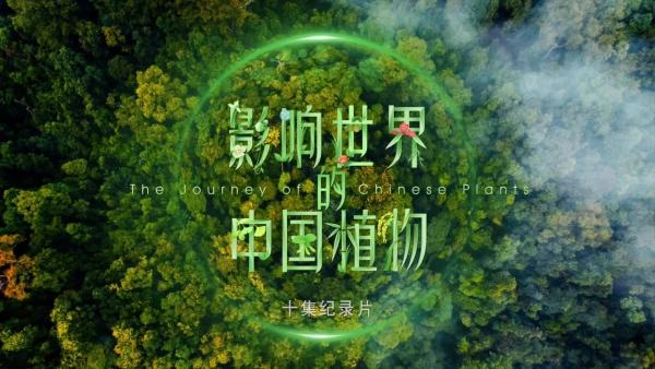 7月29日,纪录片《影响世界的中国植物》发布会在北京世园会植物馆举办。这部由北京世园局发起拍摄、北京木子合成影视文化传媒有限公司创作的国内第一部植物类纪录片,历时近3年拍摄,目前已制作完成,即将与公众见面。北京世园局常务副局长周剑平,中国贸促会贸易促进部巡视员刘晓东,中国花卉协会副秘书长、北京世园会政府副总代表张引潮,北京世园局副局长叶大华、武岗,总经济师林晋文,总工程师张兰年,延庆区委常委、宣传部部长、统战部部长黄克瀛等出席发布会。   发布会现场 周剑平表示,纪录片《影响世界的中国植物》,让人们重新回