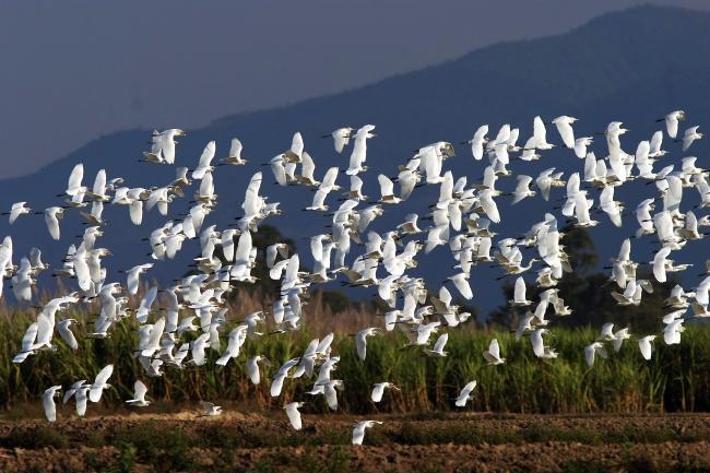 云南全面加强鸟类保护管理