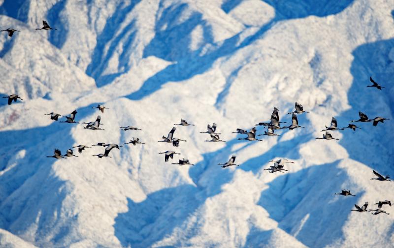 鸟的迁徙 中国大地的生命奇迹