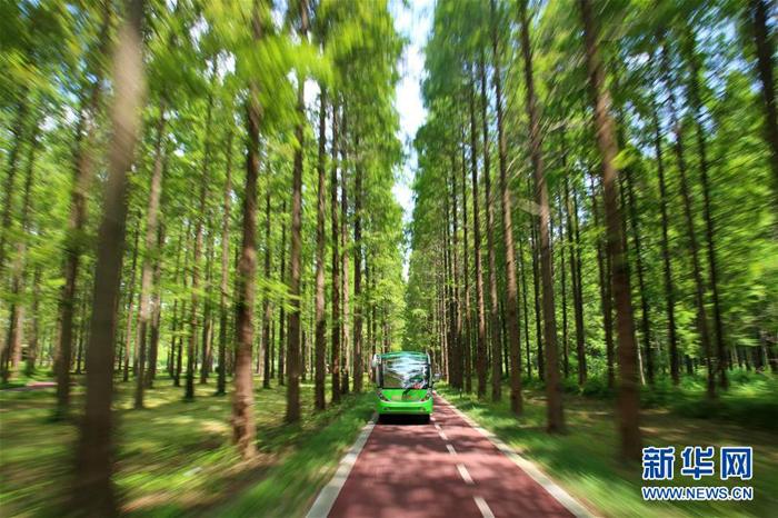 盛夏,位于江苏东台市的黄海国家森林公园内,水杉、竹林郁郁葱葱,满目苍翠。公园里气温较正常温度低3至5摄氏度,游客走进绿色森林,感受森林氧吧的凉意。新华社记者李响摄  7月22日,游人在黄海国家森林公园内的小木屋旁休息(无人机拍摄)  7月22日,观光车在黄海国家森林公园里穿梭(无人机拍摄) 新华社记者李响摄  7月22日,观光车在黄海国家森林公园里穿梭(无人机拍摄) 新华社记者李响摄  这是7月22日拍摄的黄海国家森林公园(无人机拍摄) 新华社记者李响摄  7月21日,观光车穿梭在黄海国家森林公园(无