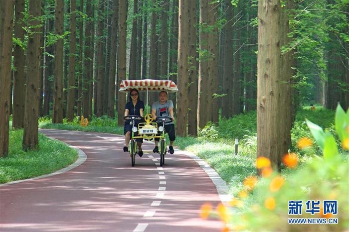 7月21日,游客在黄海国家森林公园骑行 新华社发(陈暐 摄)