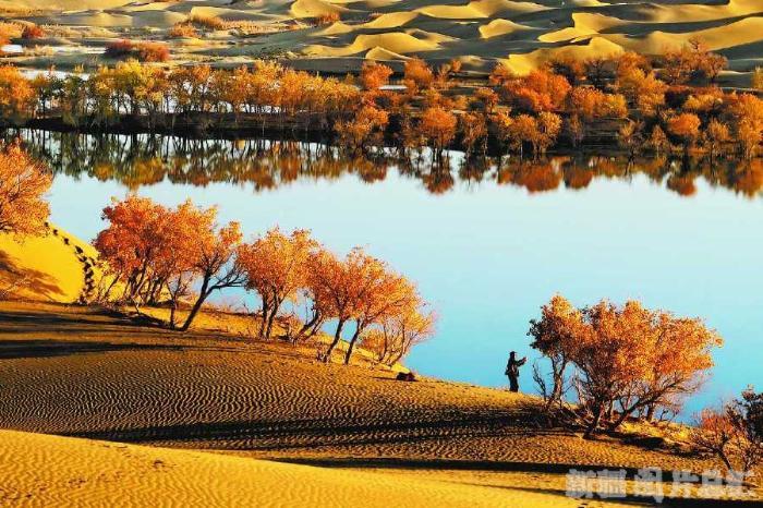 沙雅胡杨林自然公园深秋美景(10月16日摄)。 陈继宏摄  深秋时节的泽普金湖杨国家森林公园(10月16日摄)。 朱明俊摄  伊吾胡杨林秋色(10月20日摄)。 陈继宏摄   胡杨被称为沙漠英雄树,全国90%以上的胡杨生长在新疆。金秋时节,胡杨金色的叶子如同耀眼的火焰,在瀚海戈壁、塔里木河两岸汇成金色林海,璀璨了整个秋天,也倾倒了海内外游客。   塔里木胡杨林国家森林公园   塔河岸边的金色林海   新疆胡杨绝大多数分布在塔里木盆地、塔里木河两岸。塔里木胡杨林国家森林公园位于轮台县沙漠公路70公里处,
