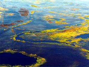 生命红线 环境保护生命线专题 图片报道
