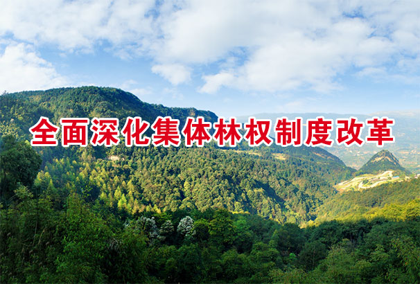 全面深化集體林權制度改革
