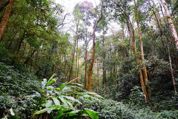 西双版纳布龙州级自然保护区方法股票常绿阔叶林热带森林最可靠的山地操作群落图片