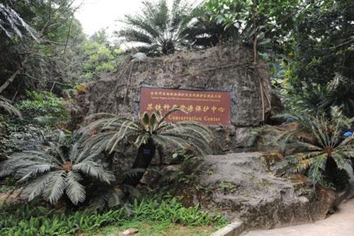 全国野生动植物保护剂自然保护区建设工程苏铁种质