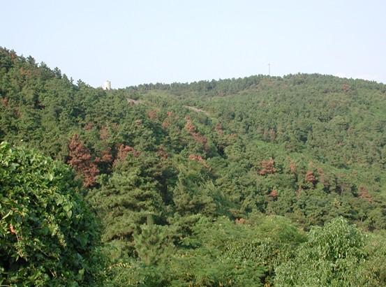 """2002年以来,根据全国林业有害生物防治工作总体部署,按照""""突出重点、点面结合、整体推进、注重成效""""的原则,狠抓重大林业有害生物的治理,组织实施国家级工程治理、试点示范和联防联治,取得了显著成效。特别是把松材线虫病防治作为""""一号工程"""",实行技术指导分片包干负责制。 到2011年底,松材线虫病疫区数量30年来首次下降,根除了1个省级疫点、25个县级疫点;美国白蛾基本实现了有虫不成灾,陕西省根除疫情,北京周边地区发生面积和危害程度明显下降,为北京奥运会和国庆60"""