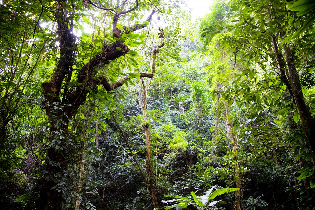 壁纸 风景 森林 桌面 1242_828