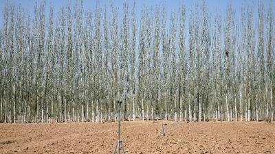 乌兰布和沙漠边缘防风固沙体系构建技术研究与试验