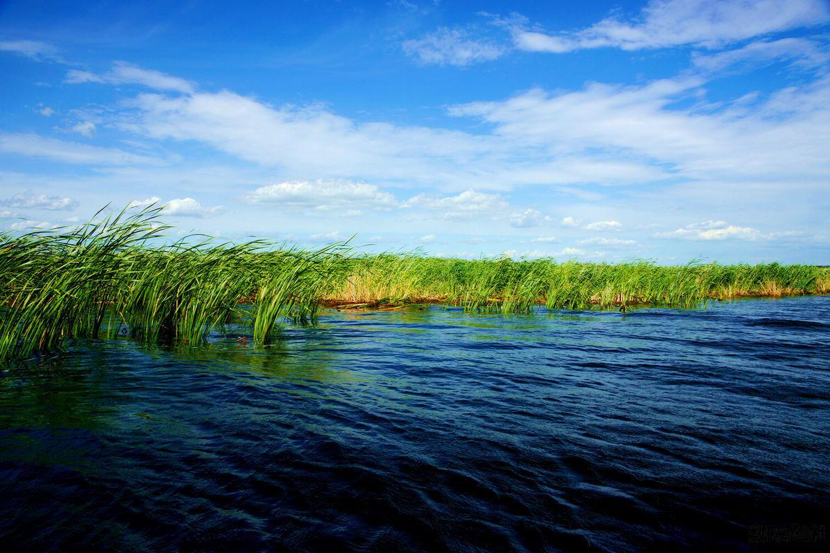扎龙保护区,图片来源于百度图片.