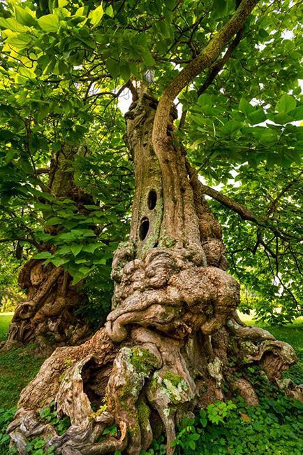 树木学家德克斯特_炉石传说砰砰计划谜题实验室清场... _3DM网游