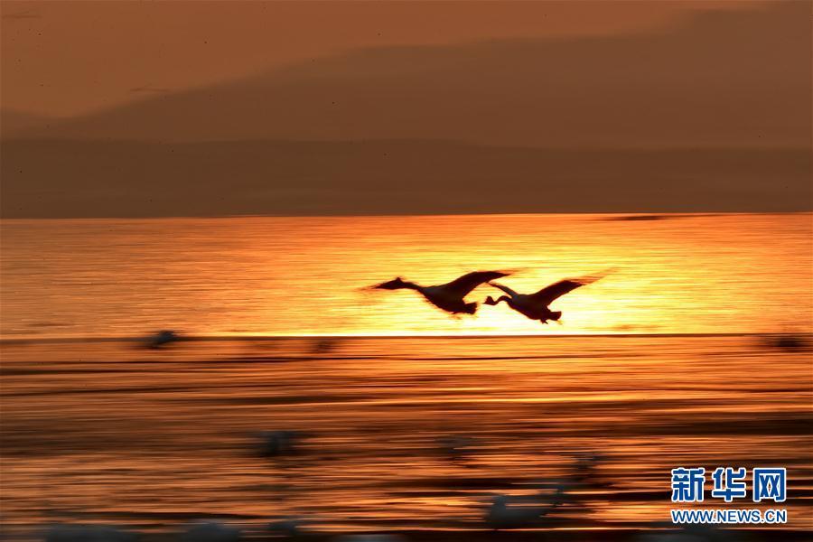 天鹅与风景图片大全