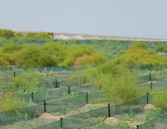 科尔沁沙地是中国北方典型的生态脆弱区,也是中国生态安全屏障建设的关键区和生态治理的重点区域。早些年,受过度放牧等日益频繁的人类活动影响,科尔沁沙地植被严重退化、干旱频繁发生,水土流失严重。   2011年起至2014年,在科尔沁沙地已工作了30年的赵学勇带领团队,利用国家重大基础研发计划课题,再一次将12.