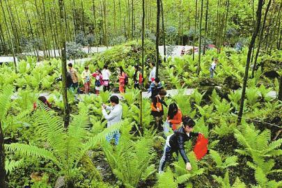 游人在成都森林蔬菜基地采摘游憩,实现种植业向一三产业融合跨越.