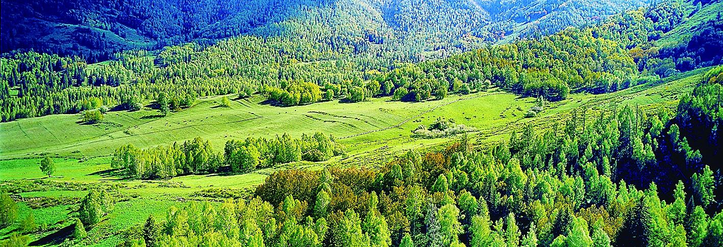 新疆维吾尔自治区林业发展纪实(上)
