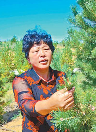 治沙造林三十二年,改造沙地七万多亩