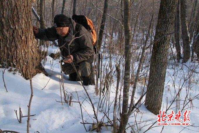 林海守望26年保护野生东北虎:收缴猎套 抓捕盗猎者
