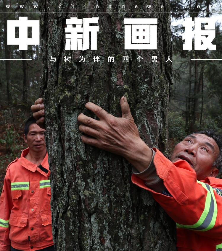 图片故事:与树为伴的四个男人
