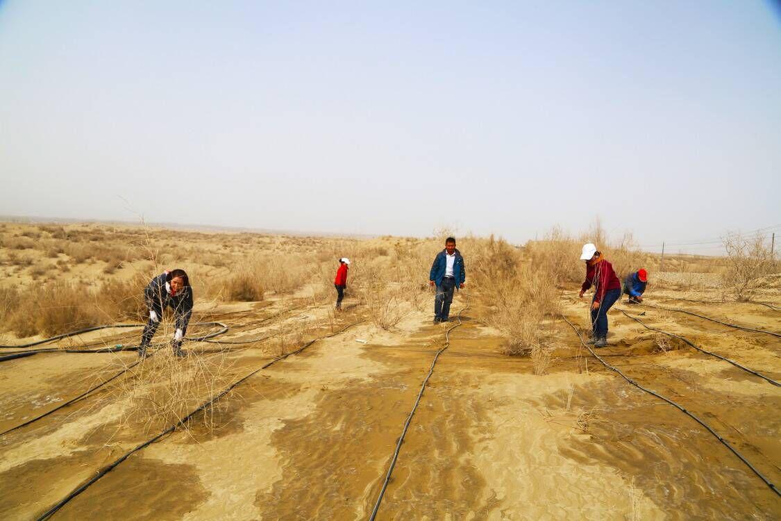 森林关系国家生态安全-新疆沙漠边城且末治沙20载在里